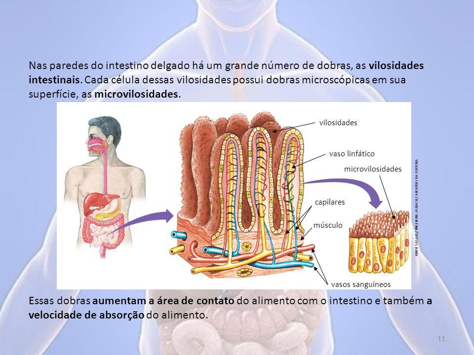 Nas paredes do intestino delgado há um grande número de dobras, as vilosidades intestinais.
