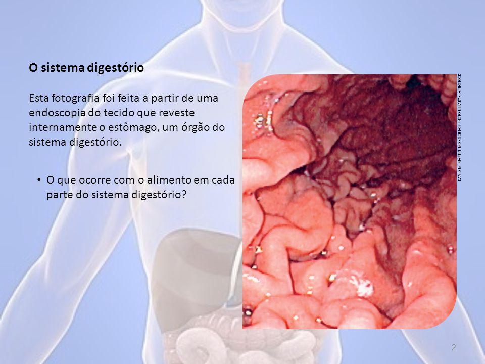 Depois de passar pelo intestino delgado, o que resta do alimento chega ao intestino grosso, que se divide em ceco e colo.