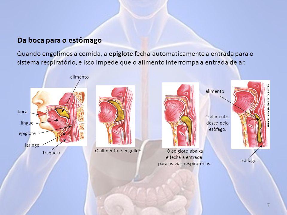 No esôfago, o alimento é empurrado até o estômago por contrações involuntárias dos músculos lisos, chamadas de contrações peristálticas.