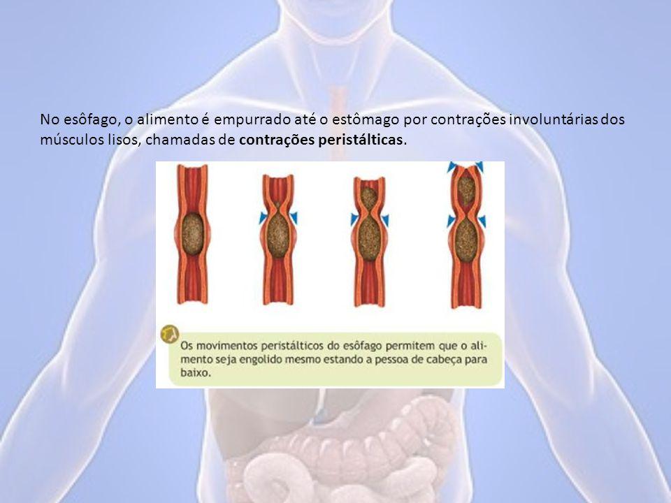 As contrações dos músculos do estômago continuam o trabalho de digestão mecânica.