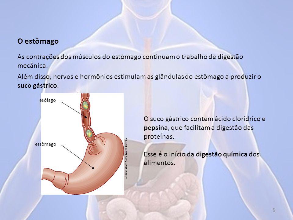 A maior parte da digestão e da absorção do alimento ocorre no intestino delgado, que se divide em duodeno, jejuno e íleo.