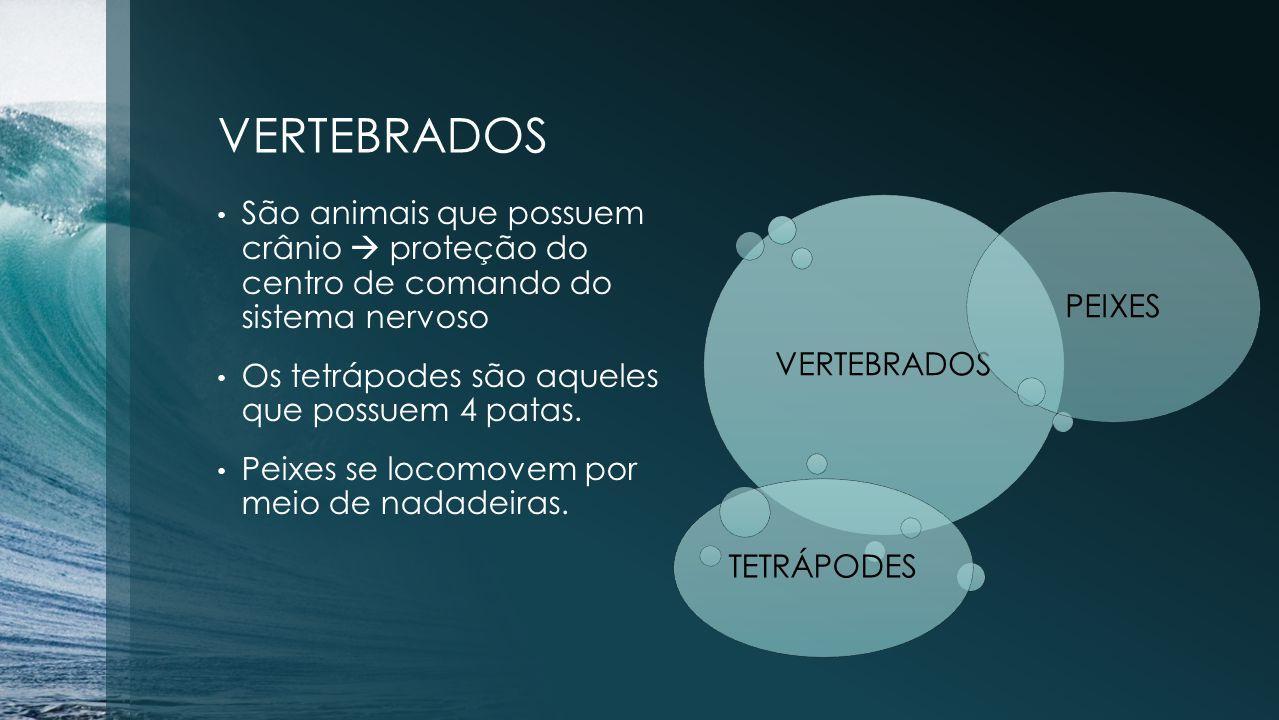 VERTEBRADOS São animais que possuem crânio  proteção do centro de comando do sistema nervoso Os tetrápodes são aqueles que possuem 4 patas. Peixes se