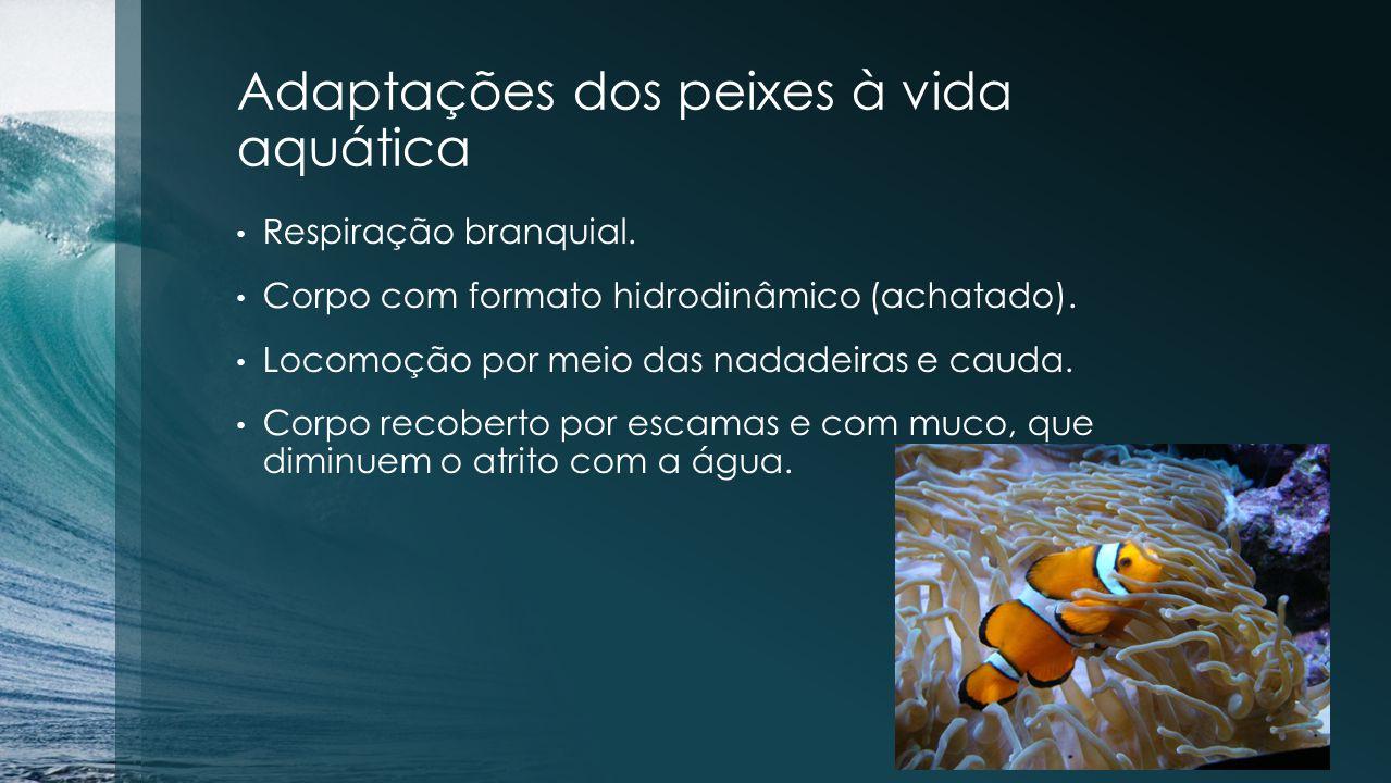 Adaptações dos peixes à vida aquática Respiração branquial. Corpo com formato hidrodinâmico (achatado). Locomoção por meio das nadadeiras e cauda. Cor
