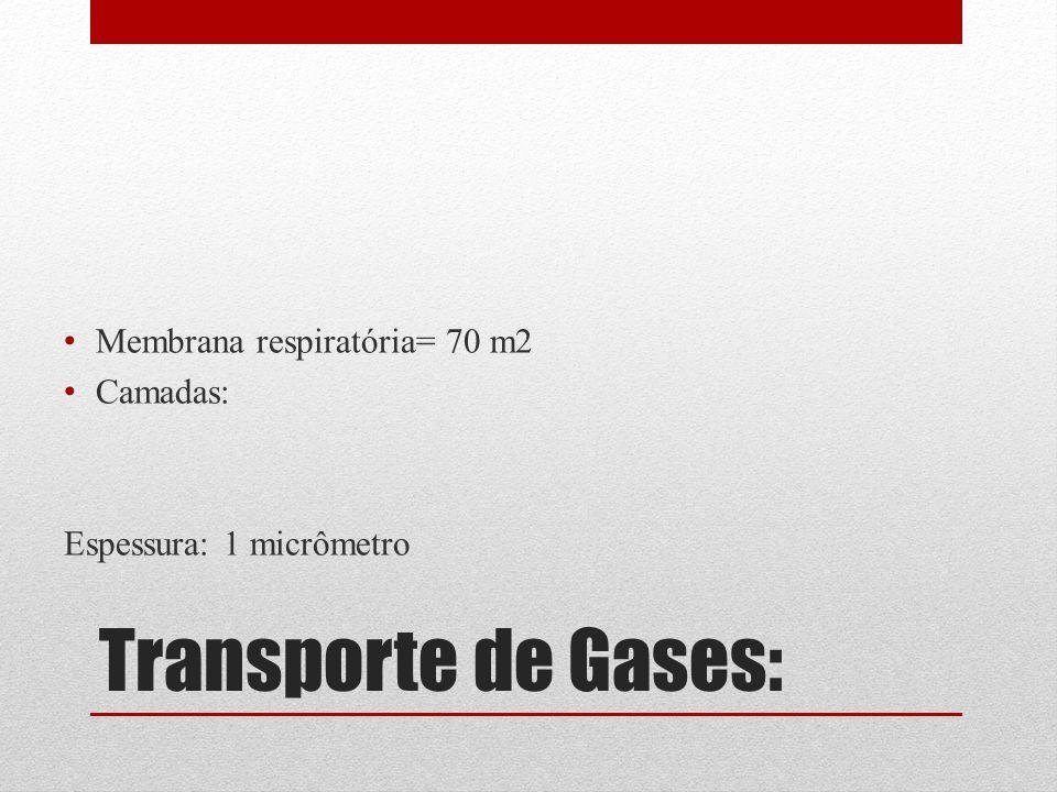 Transporte de Gases: Membrana respiratória= 70 m2 Camadas: Espessura: 1 micrômetro