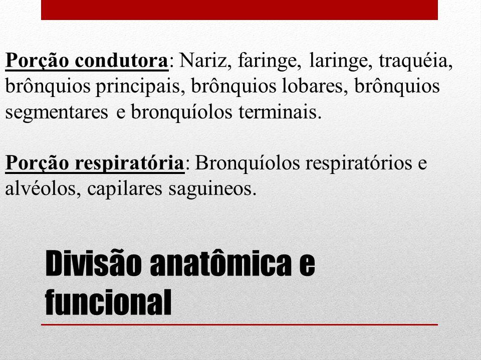 Divisão anatômica e funcional Porção condutora: Nariz, faringe, laringe, traquéia, brônquios principais, brônquios lobares, brônquios segmentares e br