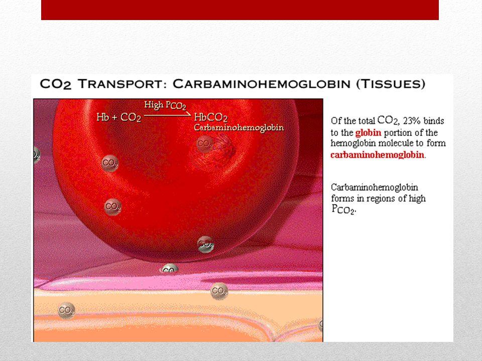 Carbamino-hemoglobina: