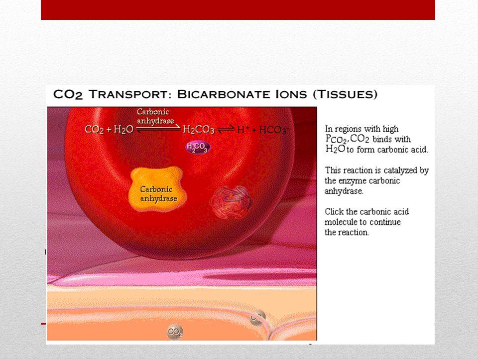 Transporte via Bicarbonato: