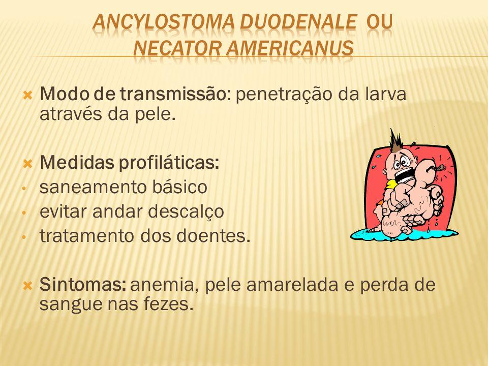  Modo de transmissão: penetração da larva através da pele.  Medidas profiláticas: saneamento básico evitar andar descalço tratamento dos doentes. 