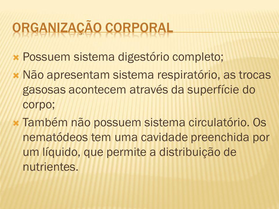  Ascaris lumbricoides (lombriga)  Ancylostoma duodenale (amarelão)  Necator americanus (amarelão)  Ancylostoma brasiliensis (bicho geográfico)  Wucheria bancrofti (filariose)  Oxyurus vermicularis (oxiurose)