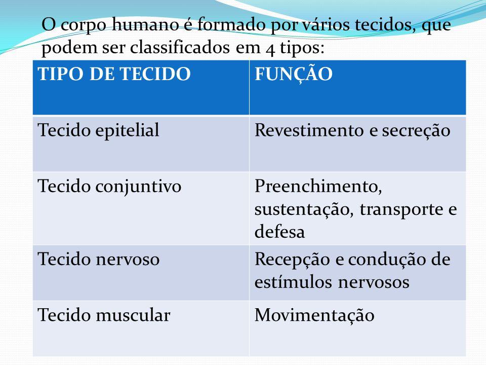 O corpo humano é formado por vários tecidos, que podem ser classificados em 4 tipos: TIPO DE TECIDOFUNÇÃO Tecido epitelialRevestimento e secreção Tecido conjuntivoPreenchimento, sustentação, transporte e defesa Tecido nervosoRecepçã0 e condução de estímulos nervosos Tecido muscularMovimentação