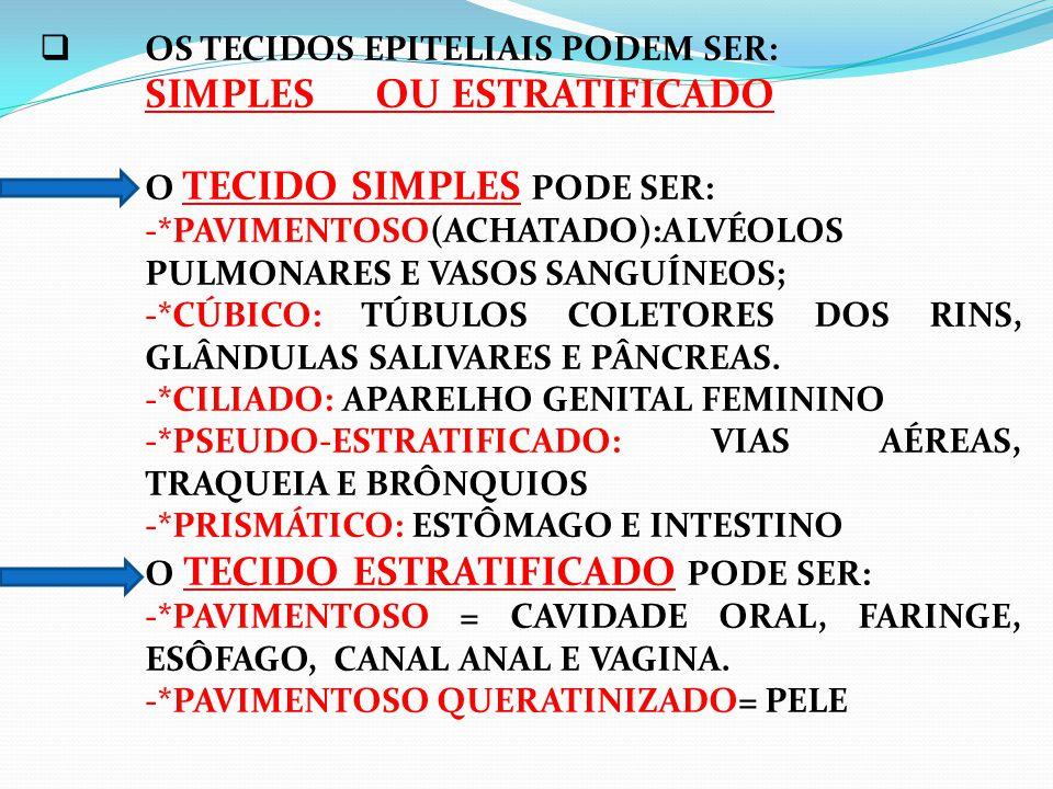  OS TECIDOS EPITELIAIS PODEM SER: SIMPLES OU ESTRATIFICADO O TECIDO SIMPLES PODE SER: -*PAVIMENTOSO(ACHATADO):ALVÉOLOS PULMONARES E VASOS SANGUÍNEOS; -*CÚBICO: TÚBULOS COLETORES DOS RINS, GLÂNDULAS SALIVARES E PÂNCREAS.