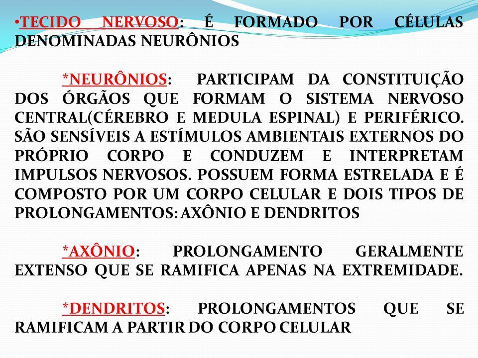 TECIDO NERVOSO: É FORMADO POR CÉLULAS DENOMINADAS NEURÔNIOS *NEURÔNIOS: PARTICIPAM DA CONSTITUIÇÃO DOS ÓRGÃOS QUE FORMAM O SISTEMA NERVOSO CENTRAL(CÉREBRO E MEDULA ESPINAL) E PERIFÉRICO.