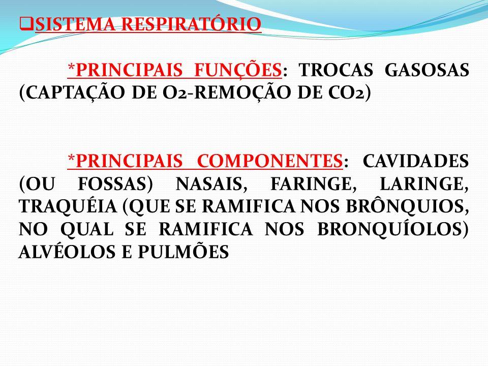  SISTEMA RESPIRATÓRIO *PRINCIPAIS FUNÇÕES: TROCAS GASOSAS (CAPTAÇÃO DE O2-REMOÇÃO DE CO2) *PRINCIPAIS COMPONENTES: CAVIDADES (OU FOSSAS) NASAIS, FARI