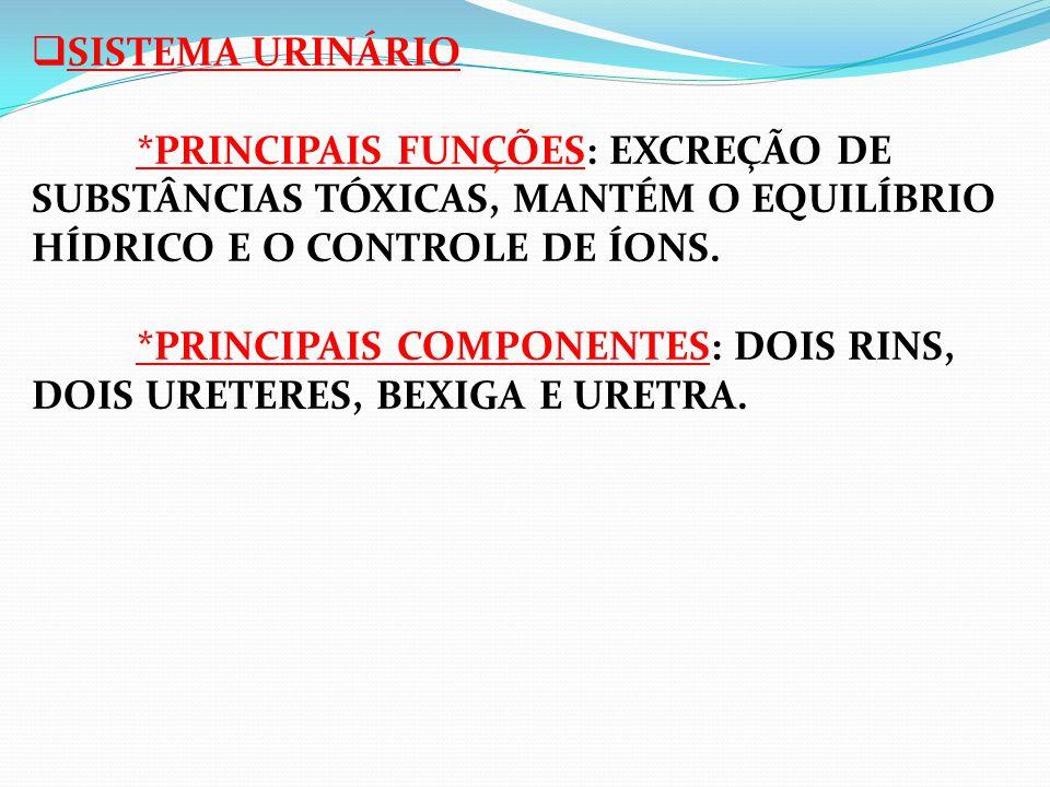  SISTEMA URINÁRIO *PRINCIPAIS FUNÇÕES: EXCREÇÃO DE SUBSTÂNCIAS TÓXICAS, MANTÉM O EQUILÍBRIO HÍDRICO E O CONTROLE DE ÍONS. *PRINCIPAIS COMPONENTES: DO