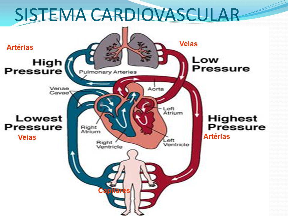SISTEMA CARDIOVASCULAR Veias Artérias Veias Capilares Artérias