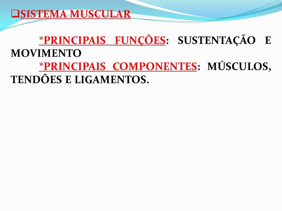  SISTEMA MUSCULAR *PRINCIPAIS FUNÇÕES: SUSTENTAÇÃO E MOVIMENTO *PRINCIPAIS COMPONENTES: MÚSCULOS, TENDÕES E LIGAMENTOS.