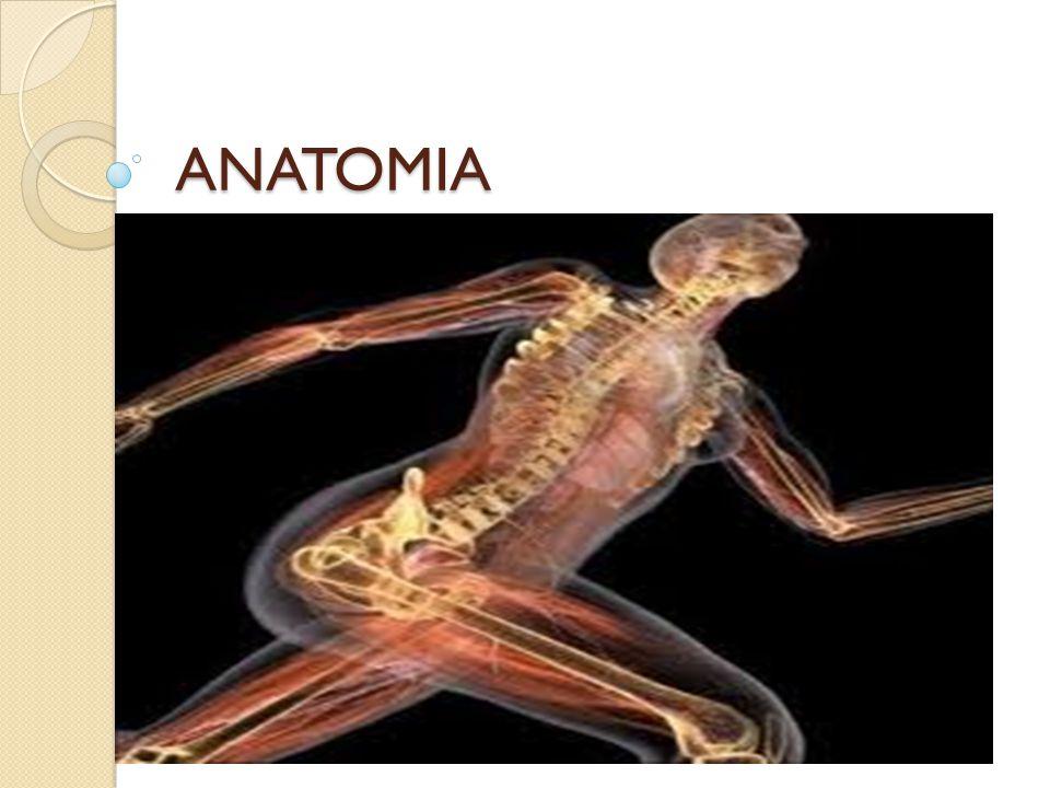 CONCEITO No seu conceito mais amplo, a Anatomia é a ciência que estuda, macro e microscopicamente, a constituição e o desenvolvimento dos seres organizados.