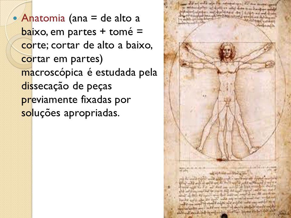 Anatomia (ana = de alto a baixo, em partes + tomé = corte; cortar de alto a baixo, cortar em partes) macroscópica é estudada pela dissecação de peças