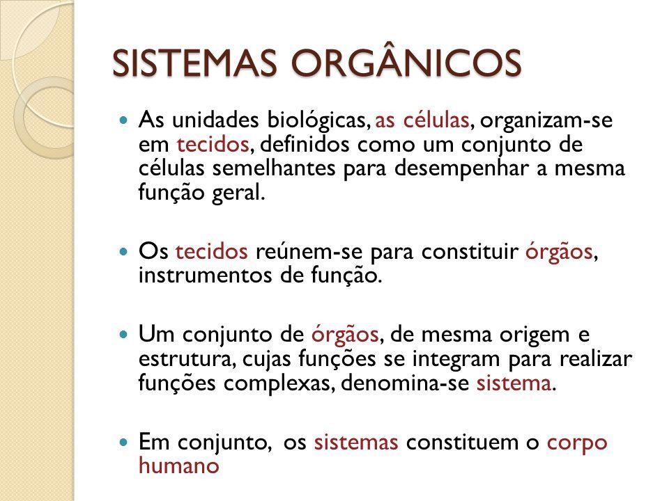 SISTEMAS ORGÂNICOS As unidades biológicas, as células, organizam-se em tecidos, definidos como um conjunto de células semelhantes para desempenhar a m