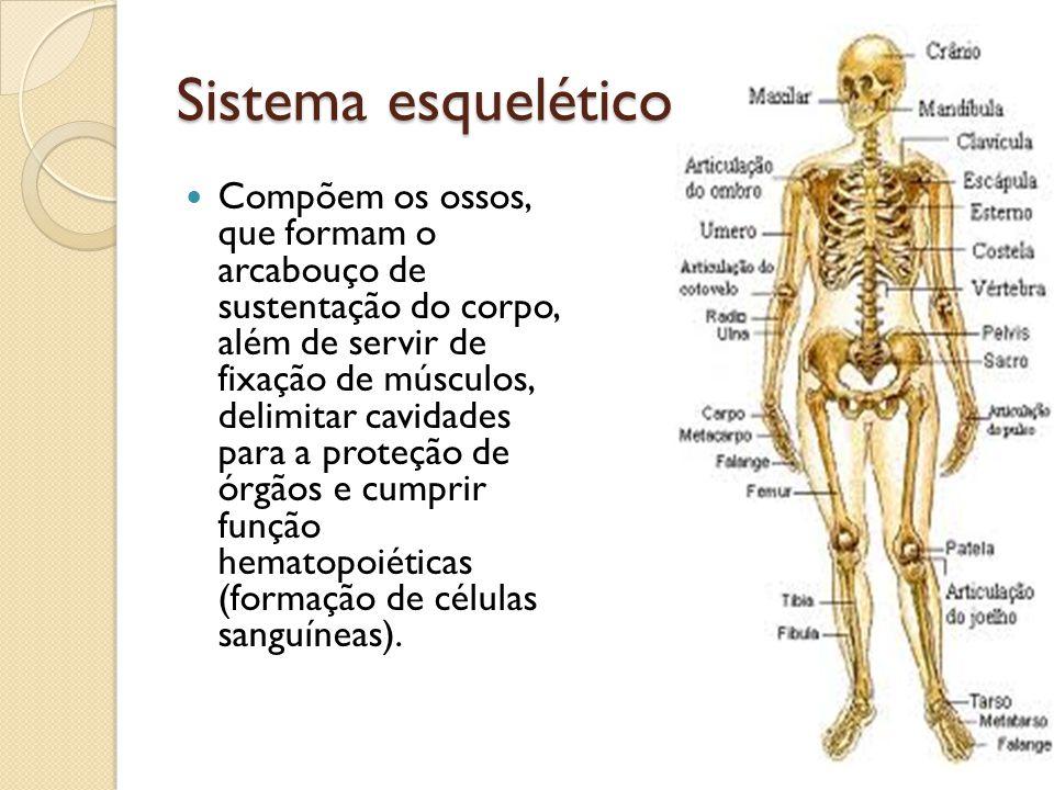 Sistema esquelético Compõem os ossos, que formam o arcabouço de sustentação do corpo, além de servir de fixação de músculos, delimitar cavidades para