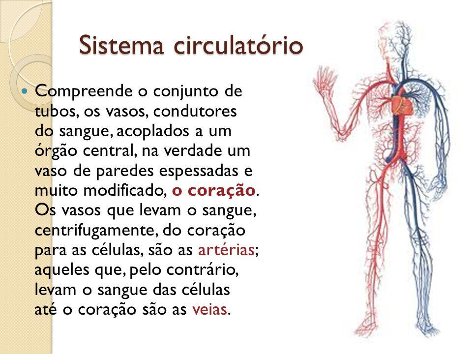 Sistema circulatório Compreende o conjunto de tubos, os vasos, condutores do sangue, acoplados a um órgão central, na verdade um vaso de paredes espes