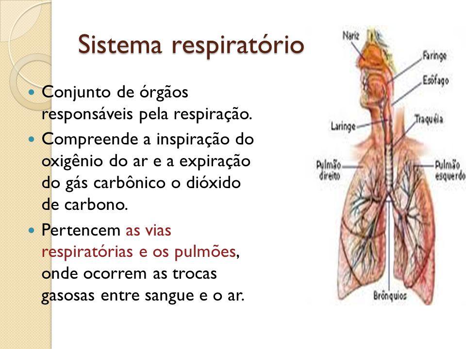 Sistema respiratório Conjunto de órgãos responsáveis pela respiração. Compreende a inspiração do oxigênio do ar e a expiração do gás carbônico o dióxi