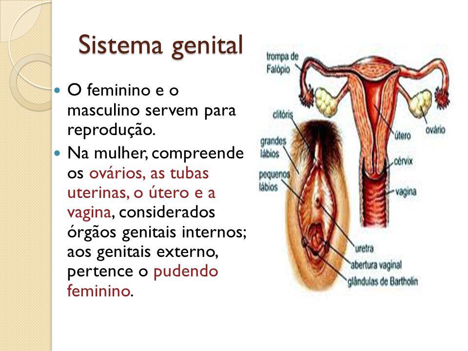 Sistema genital O feminino e o masculino servem para reprodução. Na mulher, compreende os ovários, as tubas uterinas, o útero e a vagina, considerados