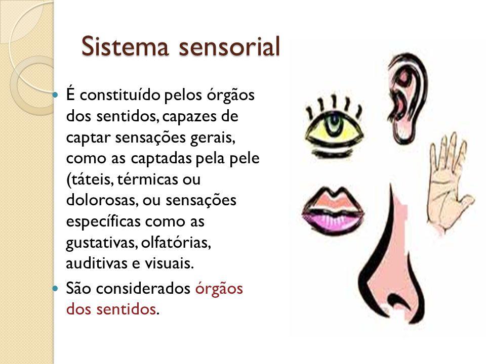 Sistema sensorial É constituído pelos órgãos dos sentidos, capazes de captar sensações gerais, como as captadas pela pele (táteis, térmicas ou doloros