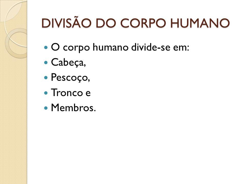 DIVISÃO DO CORPO HUMANO O corpo humano divide-se em: Cabeça, Pescoço, Tronco e Membros.