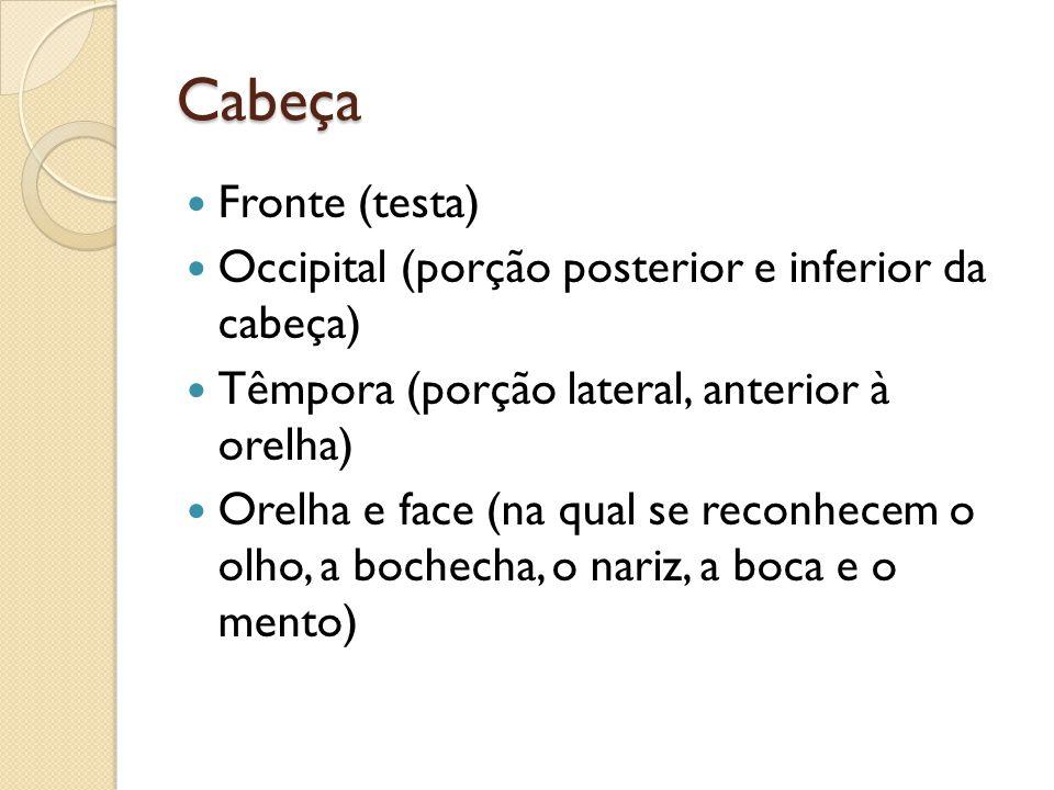 Cabeça Fronte (testa) Occipital (porção posterior e inferior da cabeça) Têmpora (porção lateral, anterior à orelha) Orelha e face (na qual se reconhec