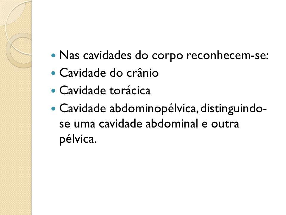 Nas cavidades do corpo reconhecem-se: Cavidade do crânio Cavidade torácica Cavidade abdominopélvica, distinguindo- se uma cavidade abdominal e outra p