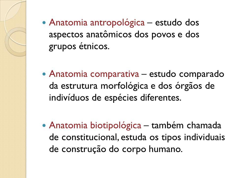Anatomia antropológica – estudo dos aspectos anatômicos dos povos e dos grupos étnicos. Anatomia comparativa – estudo comparado da estrutura morfológi