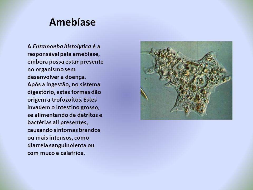 Amebíase A Entamoeba histolytica é a responsável pela amebíase, embora possa estar presente no organismo sem desenvolver a doença. Após a ingestão, no