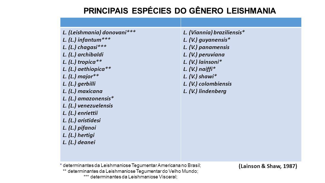PRINCIPAIS ESPÉCIES DO GÊNERO LEISHMANIA L.(Leishmania) donovani*** L.