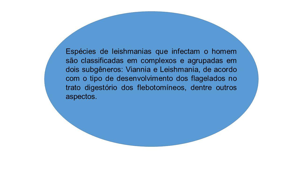 Leishmania (Leishmania): desenvolvimento predominante nos intestinos médio e anterior – desenvolvimento suprapilário; Leishmania (Viannia): processo de desenvolvimento apresenta uma fase que se passa no intestino posterior – desenvolvimento peripilário.