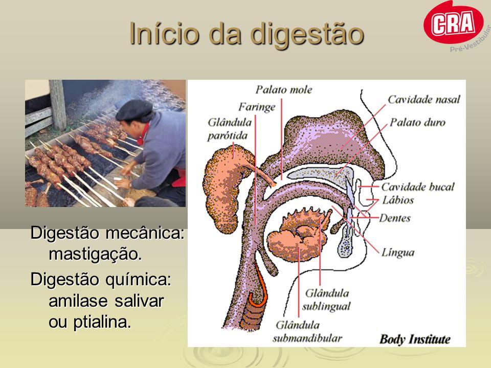 Início da digestão Digestão mecânica: mastigação. Digestão química: amilase salivar ou ptialina.
