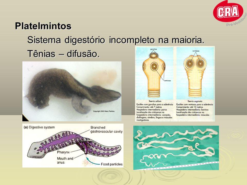 Digestão no intestino grosso Absorção de água e sais minerais.