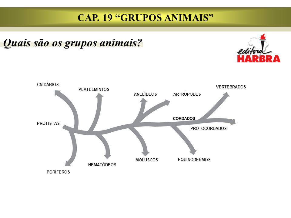 Quais são os grupos animais.CAP.