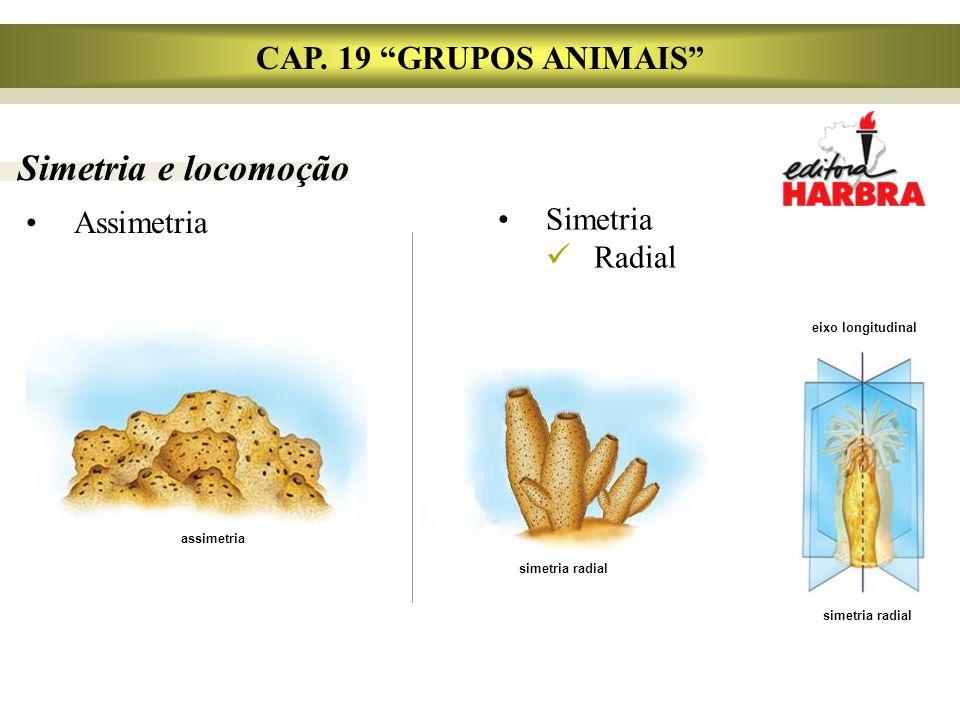 Simetria e locomoção Assimetria CAP.