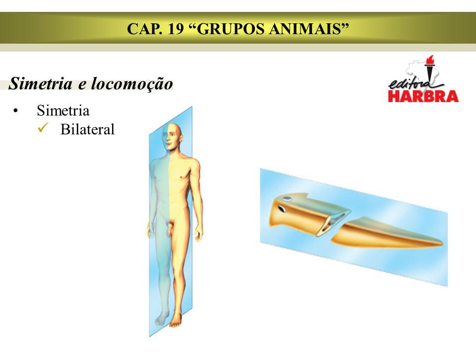 Simetria e locomoção Simetria Bilateral CAP. 19 GRUPOS ANIMAIS