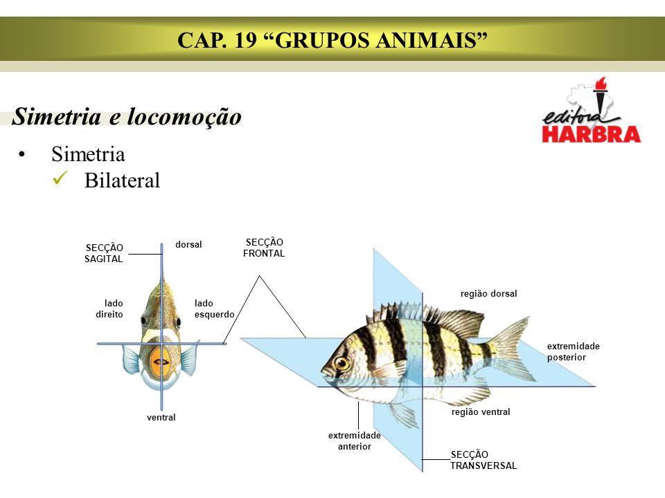 Simetria e locomoção Simetria Bilateral CAP.