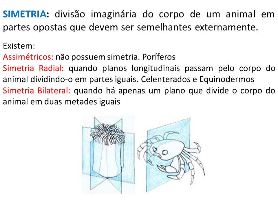 SIMETRIA: divisão imaginária do corpo de um animal em partes opostas que devem ser semelhantes externamente. Existem: Assimétricos: não possuem simetr