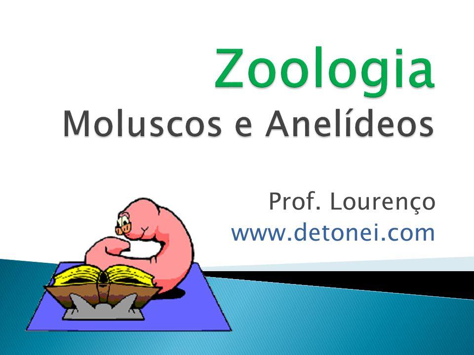 Aquáticos Sistema nervoso bem desenvolvido Dióicos sem concha
