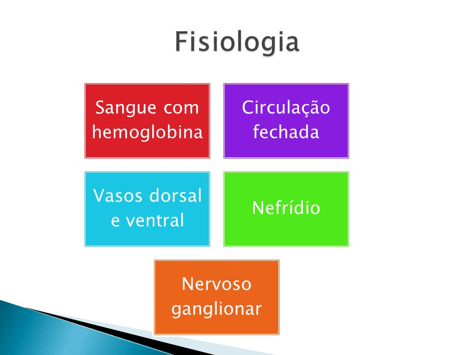 tiflossole nefrídio cordão nervoso ventral
