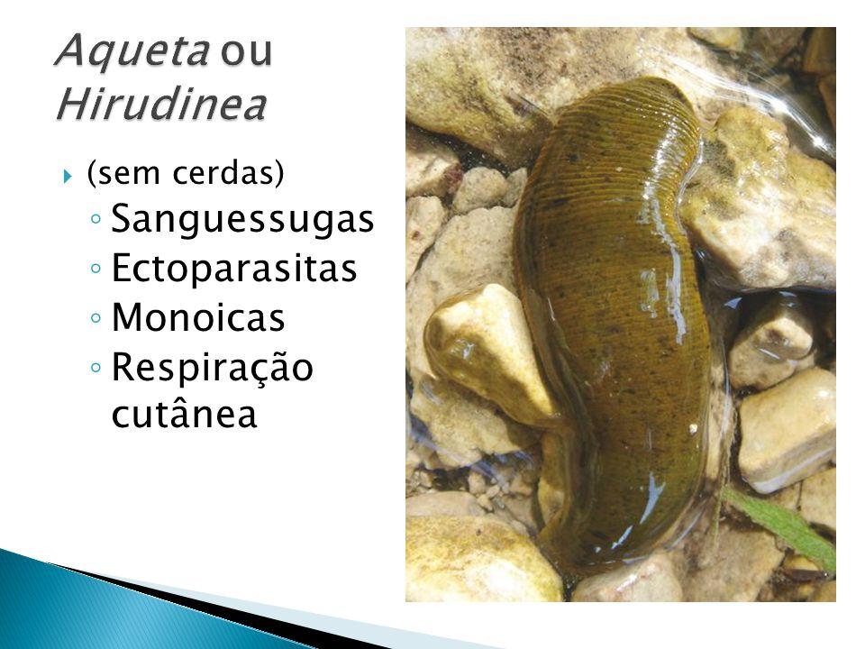  Oligoquetas  (poucas cerdas) ◦ Minhocas ◦ Detritívoras ◦ Desenvolvimento direto ◦ Monoicas ◦ Respiração cutânea
