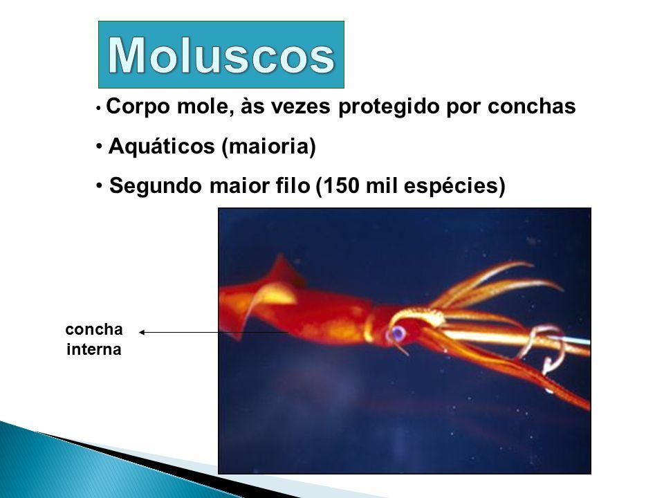 Corpo mole, às vezes protegido por conchas Aquáticos (maioria) Segundo maior filo (150 mil espécies) concha interna