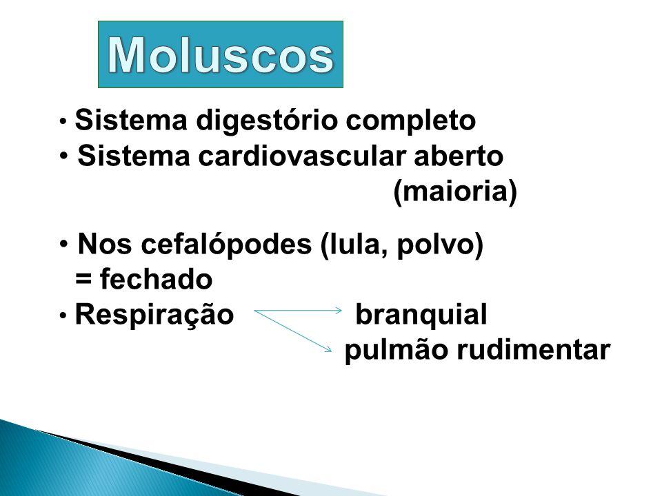 Sistema digestório completo Sistema cardiovascular aberto (maioria) Nos cefalópodes (lula, polvo) = fechado Respiração branquial pulmão rudimentar