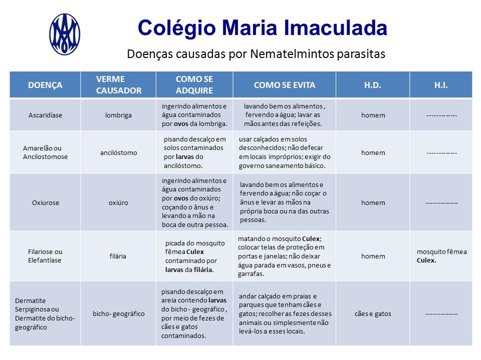Colégio Maria Imaculada Ciclo das doenças causadas por Nematelmintos parasitas 1º Ascaridíase