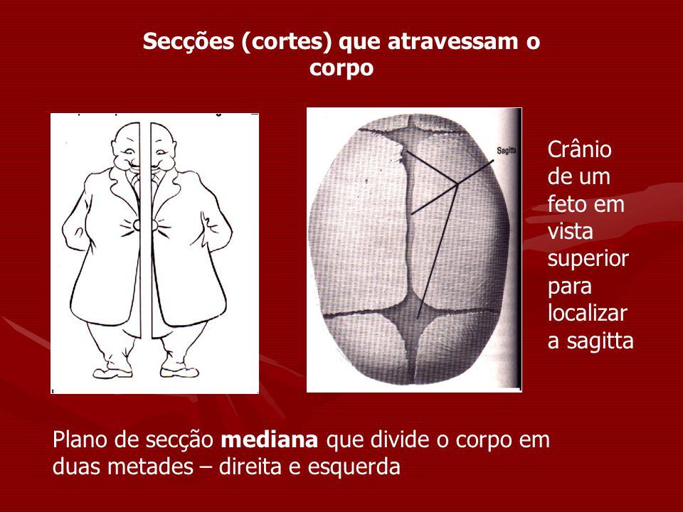 Secções (cortes) que atravessam o corpo Plano de secção mediana que divide o corpo em duas metades – direita e esquerda Crânio de um feto em vista sup