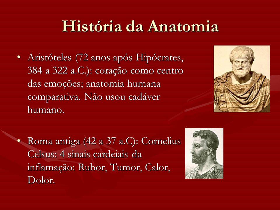 História da Anatomia Aristóteles (72 anos após Hipócrates, 384 a 322 a.C.): coração como centro das emoções; anatomia humana comparativa. Não usou cad